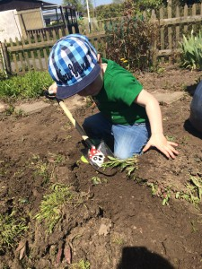 Dem Wildkrait den Kampf ansagen! Das Kind lernt spielerisch einen Unterschied zwischen essbaren und nicht essbaren Pflanzen