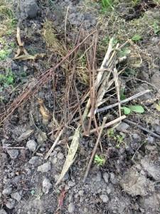 Auf die Stelle, an der sich die Ameisen tummeln, legen wir kleine Stöckchen und Ätschen als erste Schicht