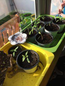 Mit eBay Haus und Garten stünden Pflanzen nicht mehr herum.... denn diese 5 Dinge erschaffen den perfekten Garten!